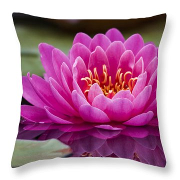 Reflections Of A Waterlily Throw Pillow