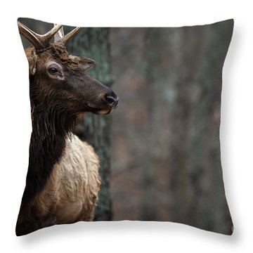 Regal Throw Pillow