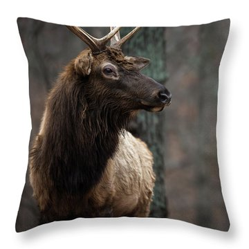 Regal Throw Pillow by Andrea Silies