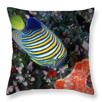 Regal Angelfish, Great Barrier Reef Throw Pillow