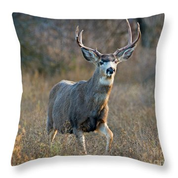 Regal Buck Throw Pillow