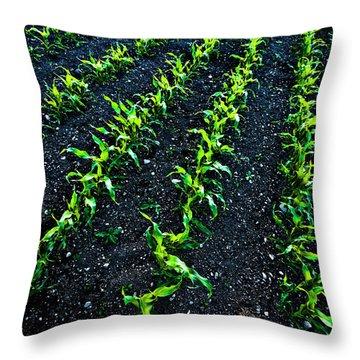 Regimented Corn Throw Pillow