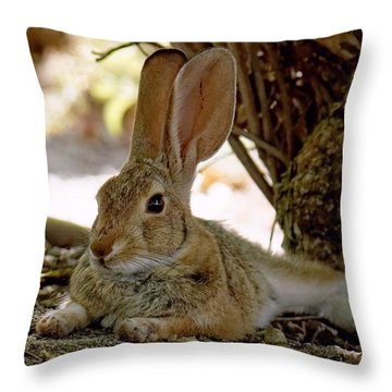 Relaxing Cottontail Throw Pillow