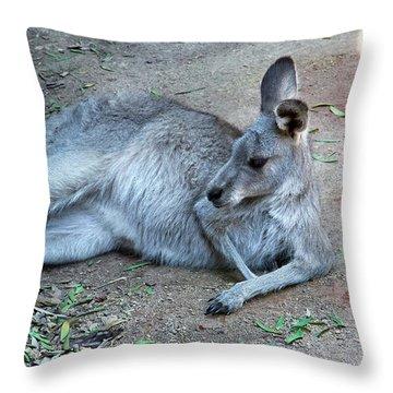 Throw Pillow featuring the photograph Relaxing Kangaroo by Miroslava Jurcik