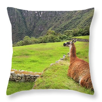 Relaxing Llama In Machu Picchu Throw Pillow