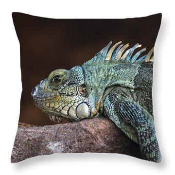Reptile Throw Pillow by Daniel Precht