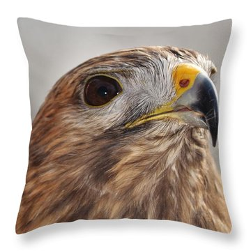 Rescued Hawk Throw Pillow