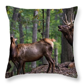 Throw Pillow featuring the photograph Responding To The Call by Andrea Silies