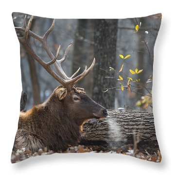 Resting Throw Pillow