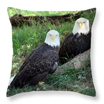 Throw Pillow featuring the photograph Resting Bald Eagles by Sheila Brown