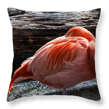 Resting Flamingo 8331 Throw Pillow