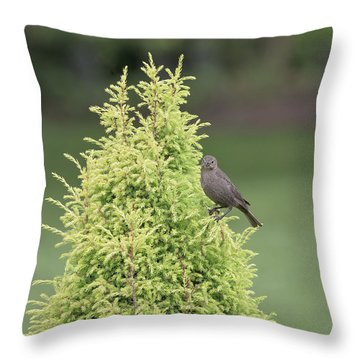 Throw Pillow featuring the photograph Resting In The Trees by Kim Hojnacki