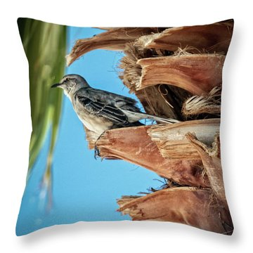 Throw Pillow featuring the photograph Resting Mockingbird by Robert Bales