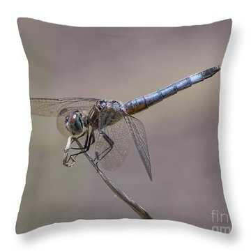 Resting My Wings Throw Pillow