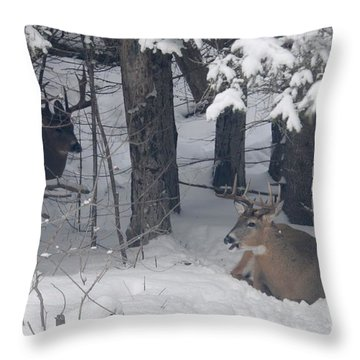 Resting Throw Pillow by Sandra Updyke