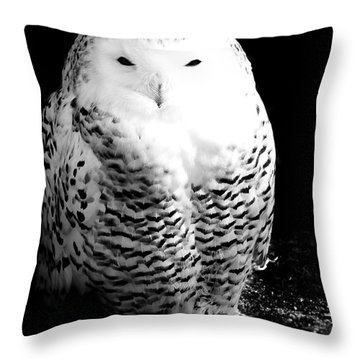 Resting Snowy Owl Throw Pillow by Darcy Michaelchuk