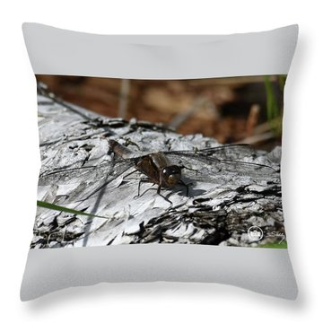 Throw Pillow featuring the photograph Resting Spot by Sally Sperry