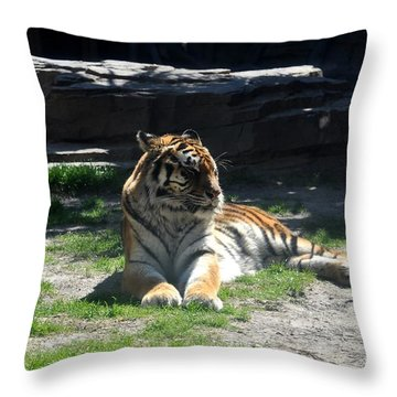 Throw Pillow featuring the photograph Resting Tiger by John Black