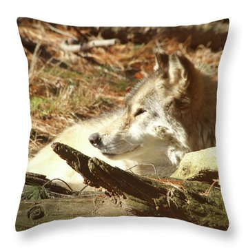 Resting Wolf Throw Pillow by Karol Livote