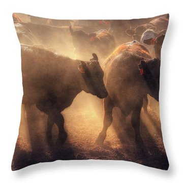 Throw Pillow featuring the photograph Restless Cattle At Sunset by Quality HDR Photography