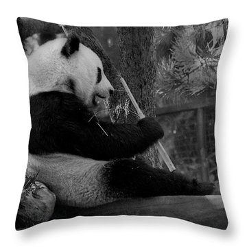 Revel In Bamboo Throw Pillow