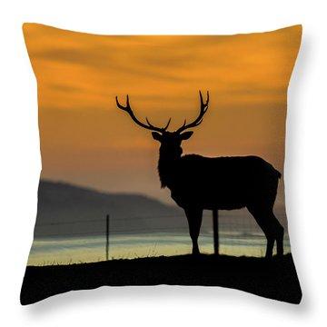Reyes Morning  Throw Pillow