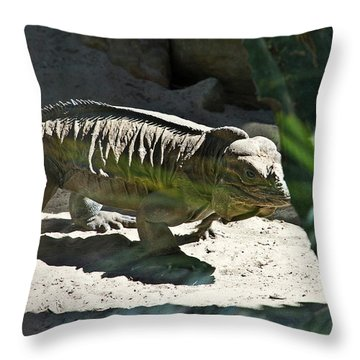 Throw Pillow featuring the photograph Rhinoceros Iguana by Miroslava Jurcik