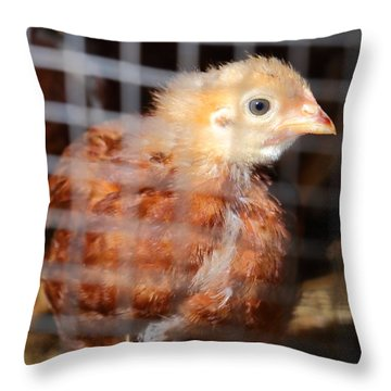 Rhode Island Red Chick At Five Weeks Throw Pillow