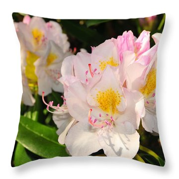 Rhododendron Throw Pillow by Catherine Reusch Daley