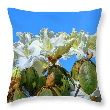 Rhododendron Ciliicalyx Dthn0213 Throw Pillow