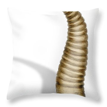 Throw Pillow featuring the painting Ribbon Leech Hirundinea Erpobdellidae - Igle - Juotikkaat - Egel by Urft Valley Art