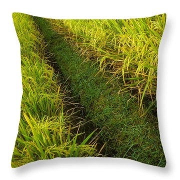 Rice Field Hiking Throw Pillow