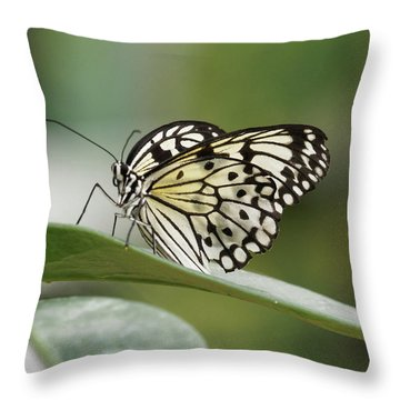 Throw Pillow featuring the photograph Rice Paper Butterfly - 2 by Paul Gulliver