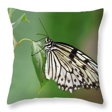 Throw Pillow featuring the photograph Rice Paper Butterfly by Paul Gulliver
