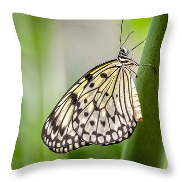 Rice Paper Throw Pillow