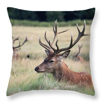 Richmond Park Stags Throw Pillow