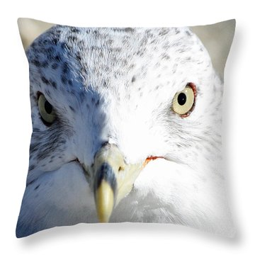 Ring Billed Gull Throw Pillow