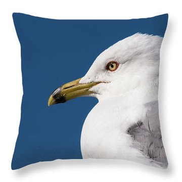 Ring-billed Gull Portrait Throw Pillow