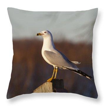 Ring Billed Gull Throw Pillow
