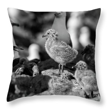 Throw Pillow featuring the photograph Ring-billed Gulls 2016-1 by Thomas Young