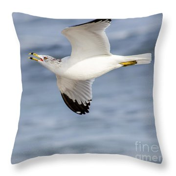 Ring-billed Seagull Looking For Attention Throw Pillow by Debra Martz