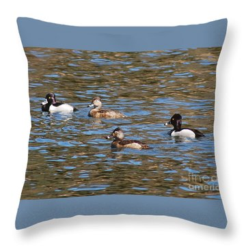 Ring Neck Ducks 20120314_d Throw Pillow by Tina Hopkins