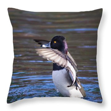 Ring-necked Duck Wings Up Throw Pillow