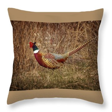Ring Necked Pheasant Throw Pillow