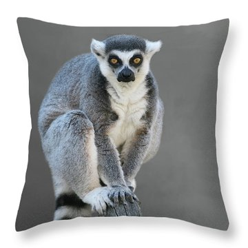 Ring-tailed Lemur #6 V2 Throw Pillow
