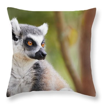 Throw Pillow featuring the photograph Ring-tailed Lemur Closeup by Nick Biemans