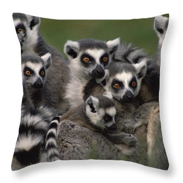Throw Pillow featuring the photograph Ring-tailed Lemur Lemur Catta Group by Gerry Ellis