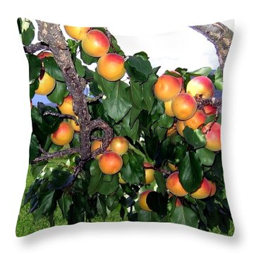 Ripe Apricots Throw Pillow by Will Borden