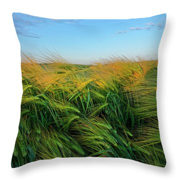 Ripening Barley Throw Pillow