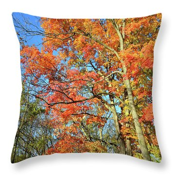 Throw Pillow featuring the photograph River Road Maples by Ray Mathis